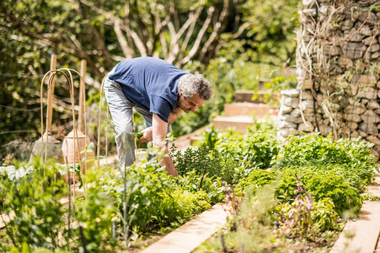 Mark picking ingredients in his garden