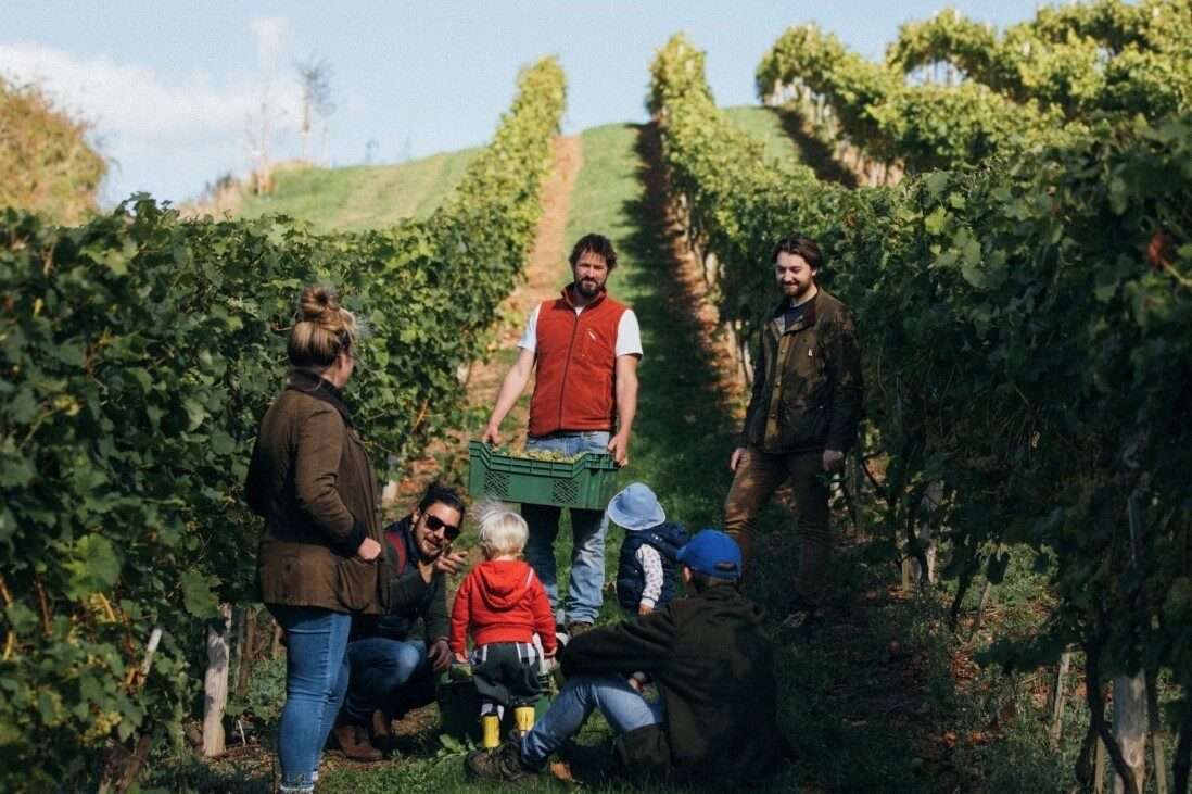 Castlewood Vineyard